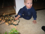 This is how Kyton helped put up the Christmas tree ... by eating and watching over the lights!